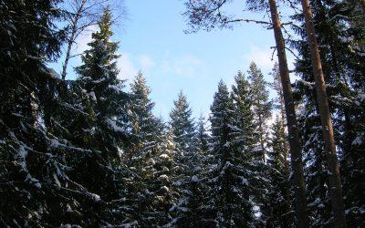 De ruta por los bosques nevados de Estonia