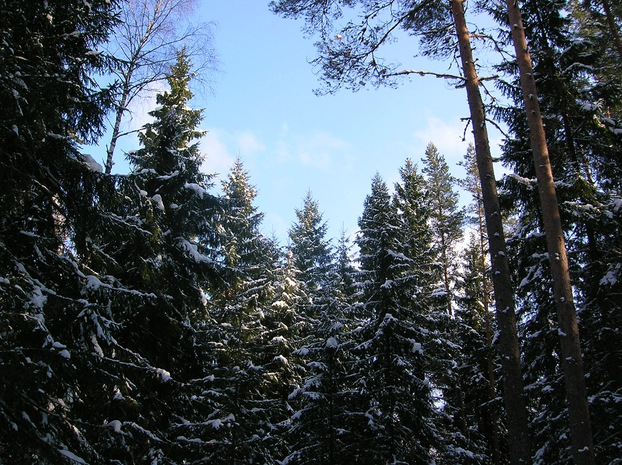 De ruta por los bosques nevados de Estonia
